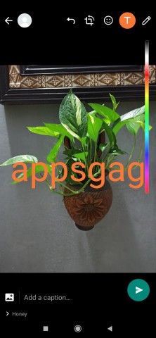 ogwhatsapp-apk-download.jpg